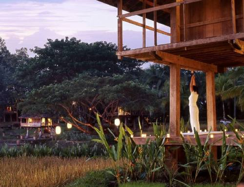 Rejuvenate and Recharge with Yoga Retreats in Chiang Mai