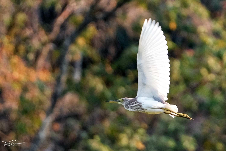 Four Seasons Chiang Mai Birding