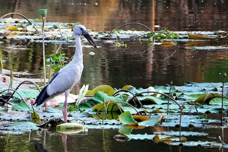 Chiang Mai birding